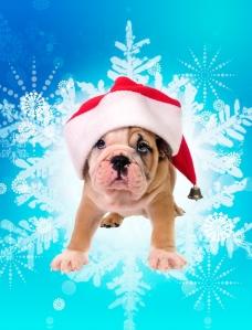 snowflakedog
