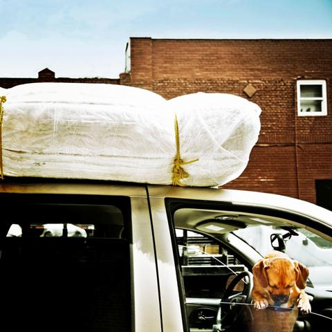 dog,car,summer,windows down