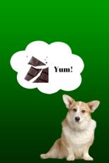 Dog Craving Chocolate