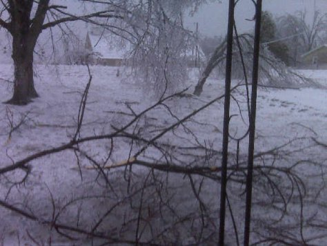 ice,trees,branches,snow