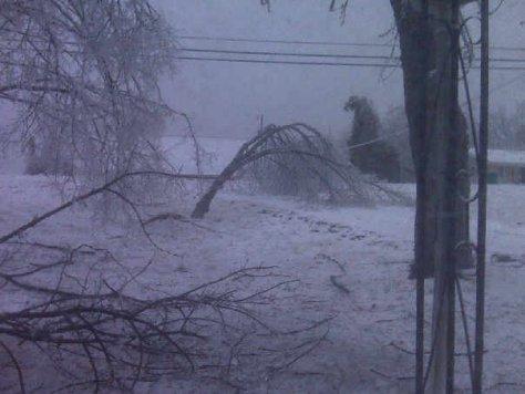ice,trees,branches,snow,storm,debris