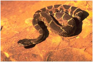 Snakes in the backyard - PetCorps Professional Pet Care Blog
