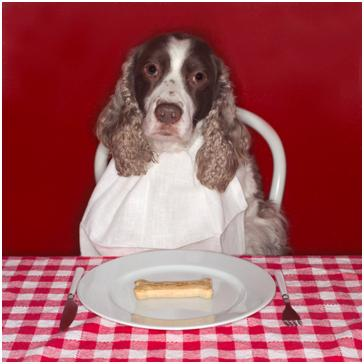 Dog sitting at dinner table wearing a napkin with a bone on a plate and a fork and knife