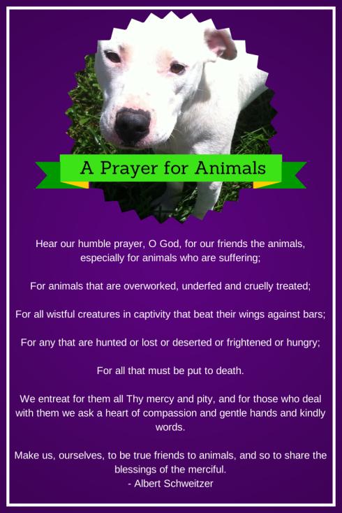 A Prayer for Animals - Albert Schweitzer