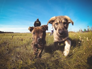 puppyfriends