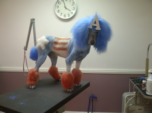 Doodle the Poodle as Captain America