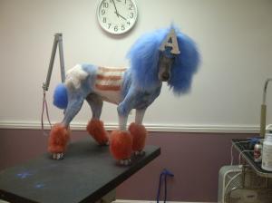 Doodle the Poodle as Captain America
